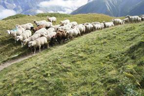 2013-09-debr-moutons-295
