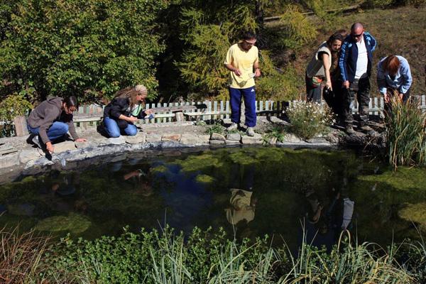 Des mares pour le sonneur ancelle parc national des ecrins - Faire une mare dans son jardin ...