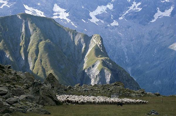 14-troupeau-vallompiere