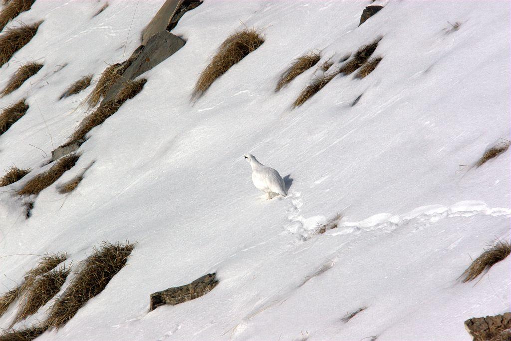 14-11-lautarelago-hiver025132