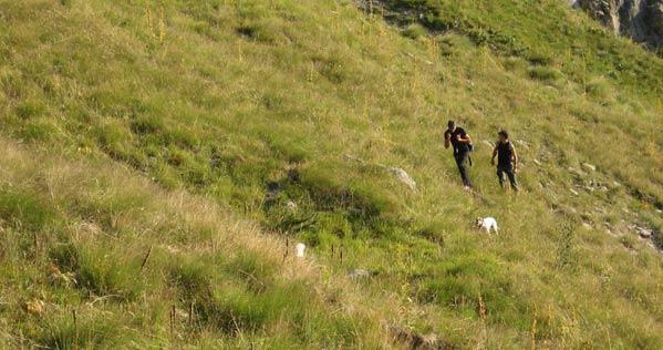 2009-08-comptage-chien