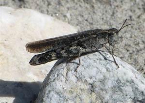 2009-09-criq-torr-femelle