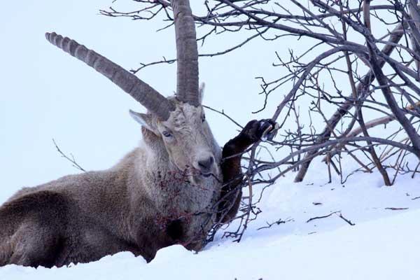 2010-03-ibex-alisier02