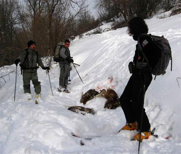 2010-03-mouflons02