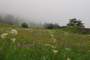 2001-06-prairie2-295