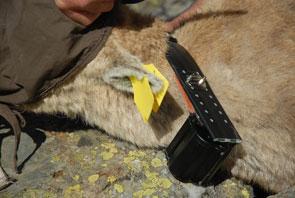 2013-04-18-ibex-collier295