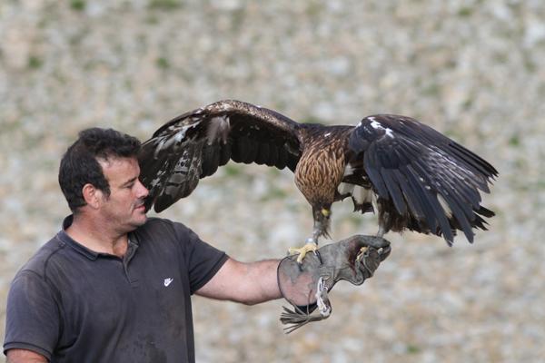 2013-09-malaterre-aigle