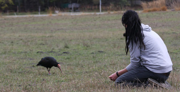 2013-11-ibis-600