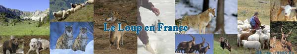2009-06-rapport-loup