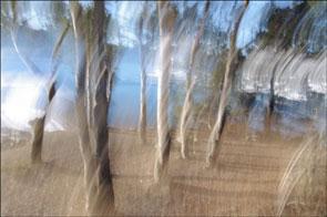 2011-08-arbres-flous2