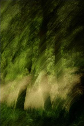 2011-08-arbres-flous3