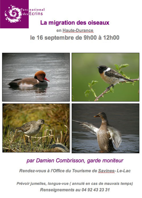 observation migration oiseaux