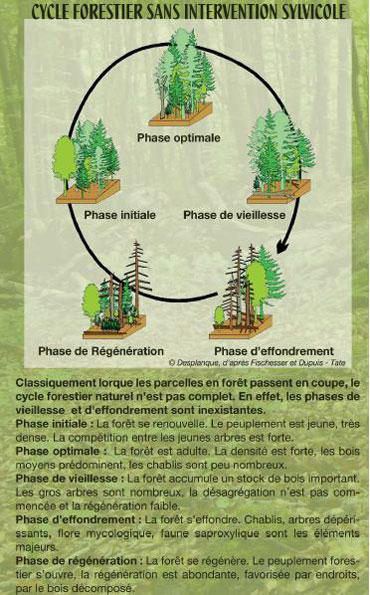 2011-09-cycle-forestier