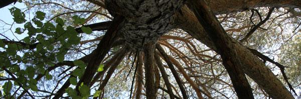 2011-09-foret1-arbre600hori