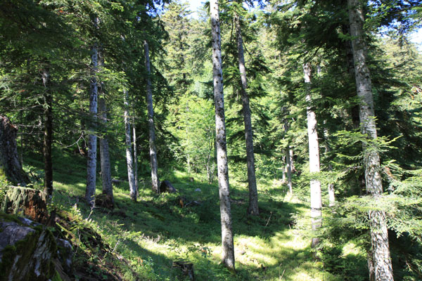 2011-09-pays-boscodon