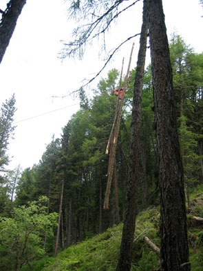 2011-10-foret2-cable-vert
