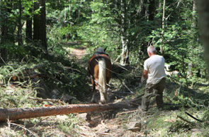 2011-10-foret2-cheval