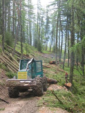 2011-10-foret2-tracteur-vert