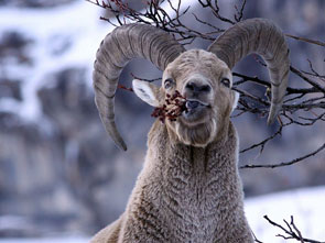 2012-08-ibex