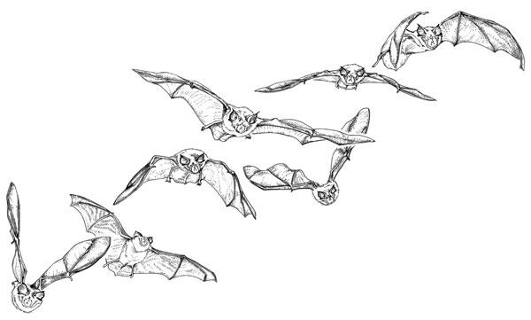 Les chauves souris faites en vos amies parc national des ecrins - Chauve souris a imprimer ...