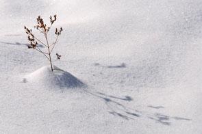 2012-12-herbe-hiver
