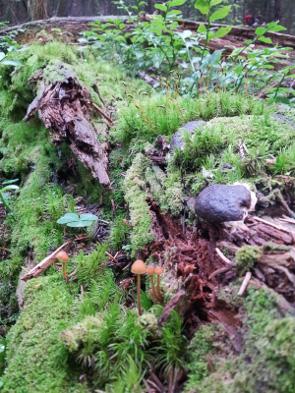 2013-9-ri-atbi-biodiversite-lauvitel