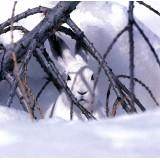 carte-postale-faune-livre-blanc