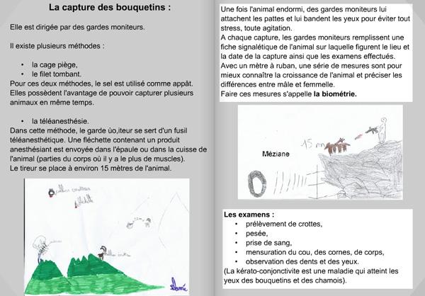 14-04-jd-oisans-bouquetins1