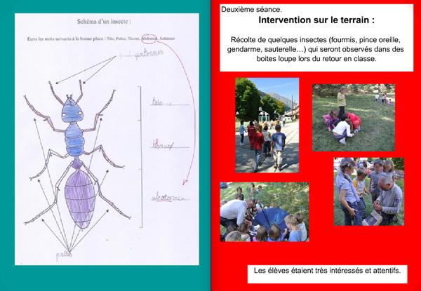 14-04-jd-oisans-insectes1