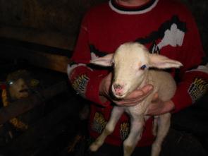 2014-01-jd-fressi-agneau