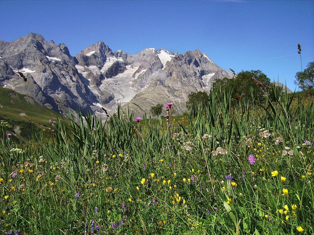 Prairie subalpine en pleine floraison. devant le versant est du massif de La Meije ©Bernard Nicollet - Parc national des Ecrins