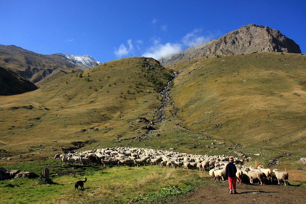 Pastoralisme au Saut du Laire © Marc Corail - Parc national des Ecrins