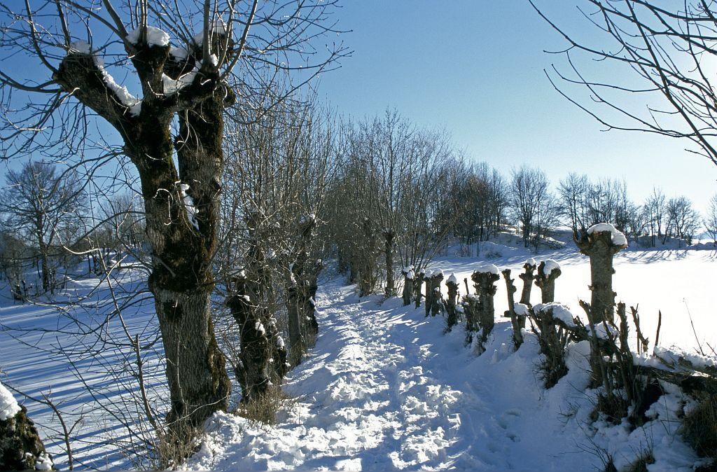 Arbres têtards aux Roranches ©Marc Corail - Parc national des Ecrins