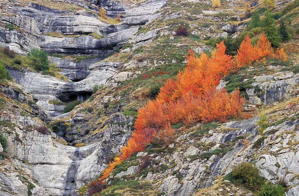 Bois de trembles à Chaillol ©Marc Corail - Parc national des Ecrins