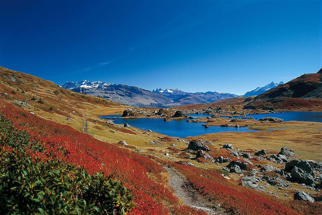 Plateau du Taillefer, lac noir et l'agneau © Denis Fiat - Parc national des Ecrins