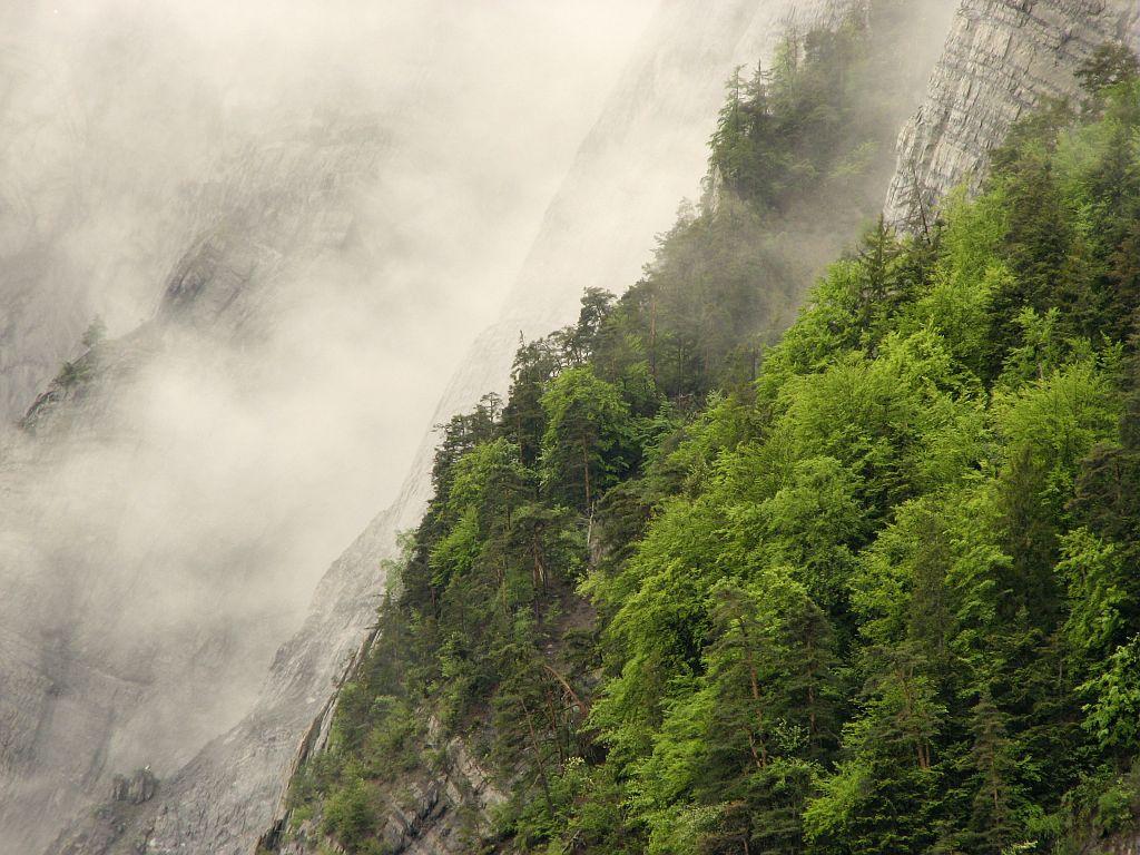 Brouillard sur la forêt de Prégentil ©Christophe Albert - Parc national des Ecrins