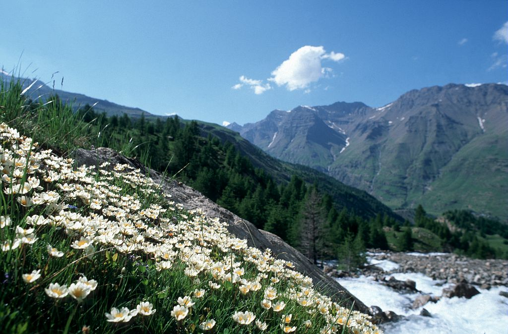 Dryades au Fangeas ©Robert Chevalier - Parc national des Ecrins