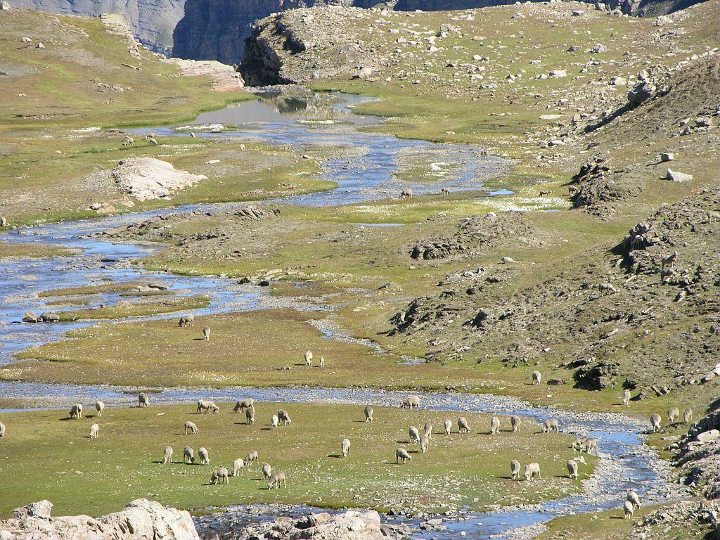 Méandres du quartier d'août et moutons - Col des Terres blanches ©Thierry Maillet - Parc national des Ecrins