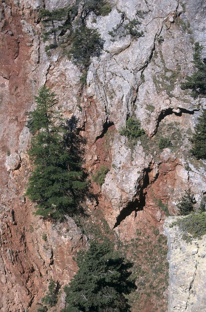 Sous la Salcette, la vie s'accroche © Marie-Geneviève Nicolas - Parc national des Ecrins