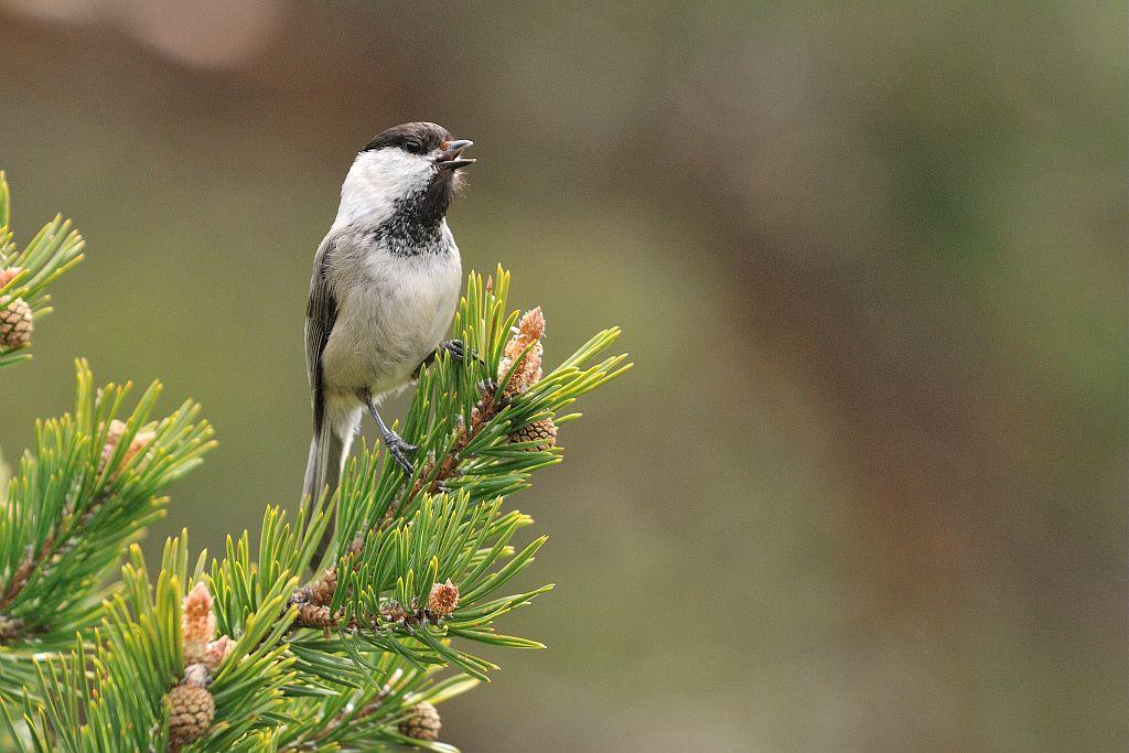 photo M.Coulon - Parc national des Ecrins