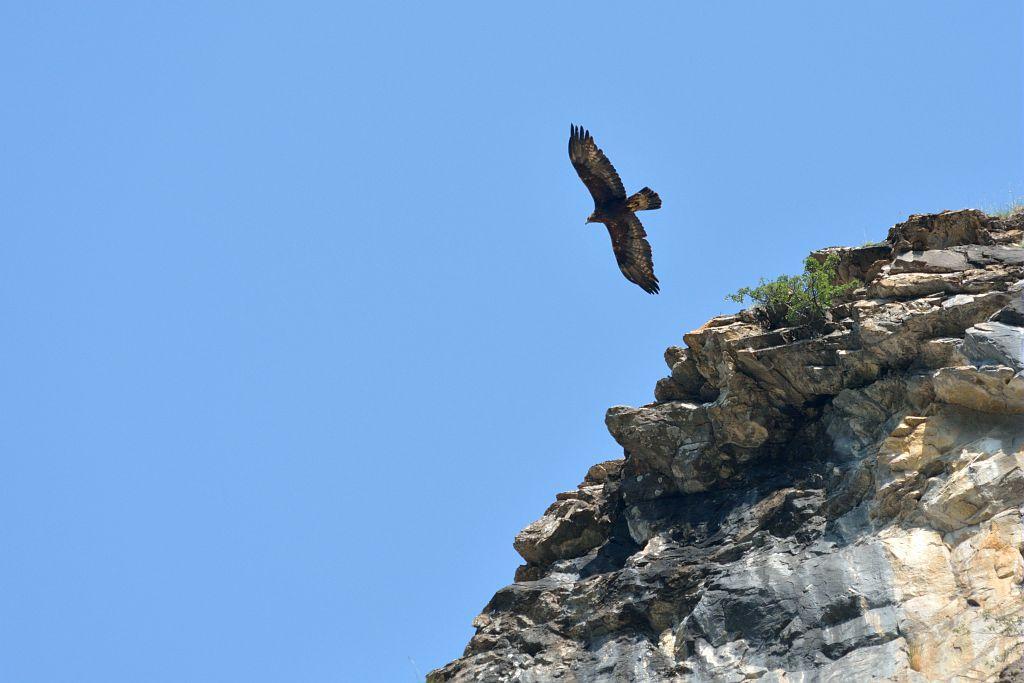 Quand les aigles font leur nid - © Mireille Coulon - Parc national des Ecrins
