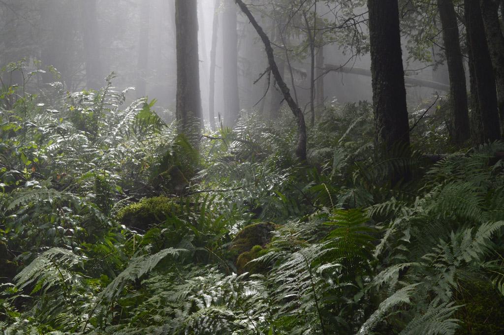 forêt-ancienne-vers-Archinard-(Orcières) © J.Guilloux-Parc national des Ecrins