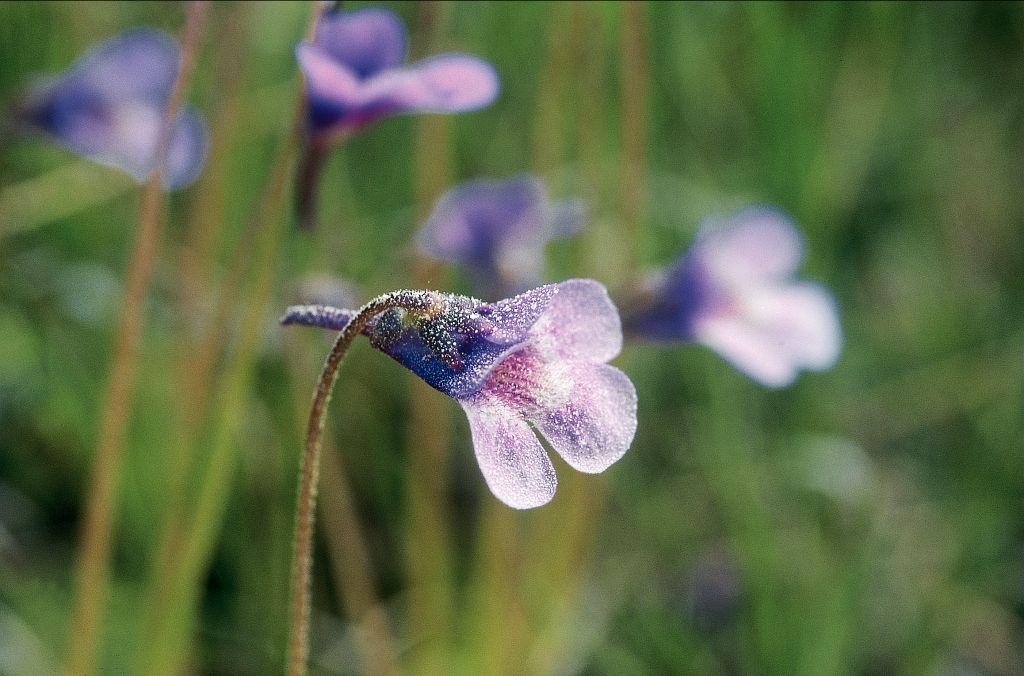 La Grasset © B.Nicollet - Parc national des Écrins