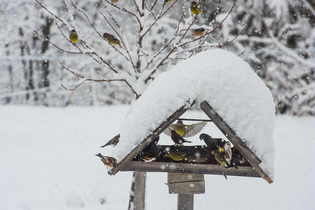 Passereaux dans la neige - © M.Coulon - Parc national des Ecrins