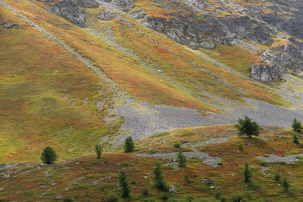 Pelouse à l'automne - col du Lautaret © Mireille Coulon - Parc national des Ecrins