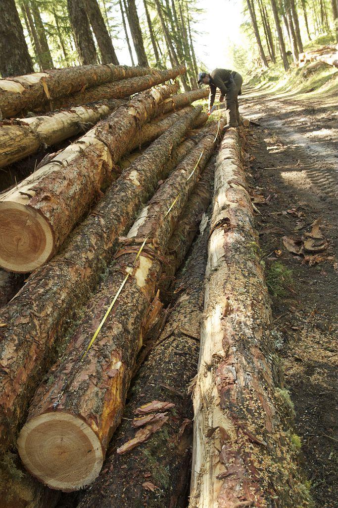 ICONO, La forêt -  travaux forestiers - filières bois © Jean-Philippe Telmon - Parc national des Ecrins