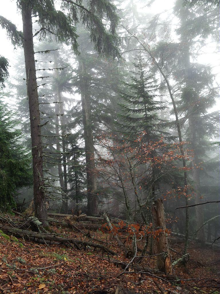 Forêt d'ubac dans la brume - Le Touret © Bernard Nicollet - Parc national des Ecrins
