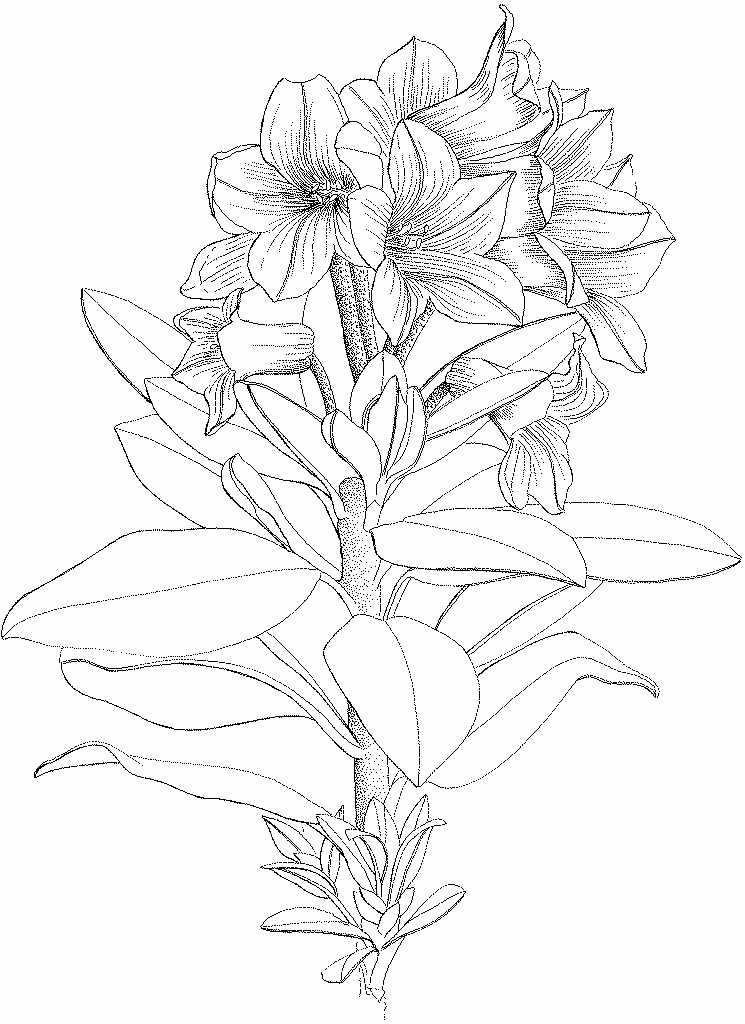 Rhododendron ferrugineux © Frédérique Levy - Parc national des Ecrins