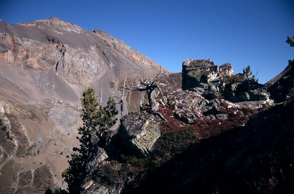 Les derniers arolles (pins cembros), 2450 mètres d'altitude © Christian Couloumy - Parc national des Ecrins