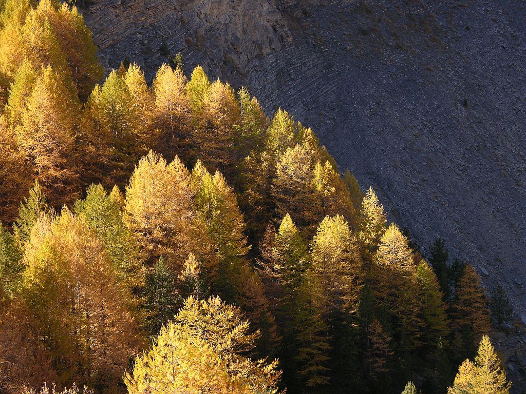 Mélèzin d'automne © Thierry Maillet - Parc national des Ecrins